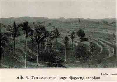 korn noesapenida 1944 99 terraces corn