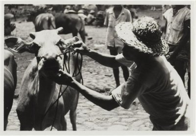 cattle trade bali pl dronkers 1947 02